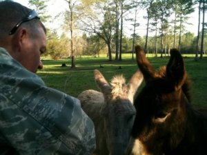 DFS Donkeys