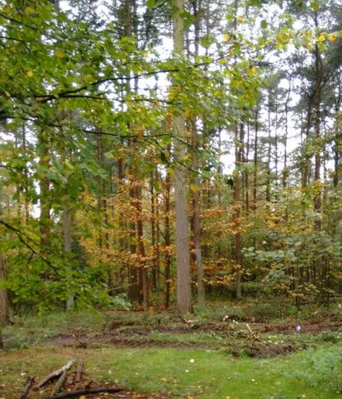 write31days-journeyingintojoy-wood-for-the-trees
