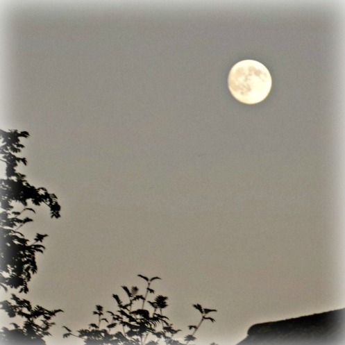 write31days-silvery-moon