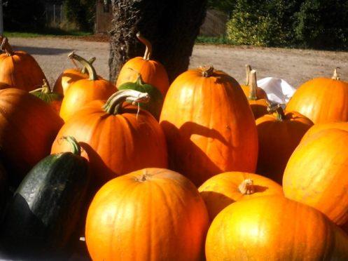 Imprints - on Halloween and All Souls Day (C)joylenton @poetryjoy.com