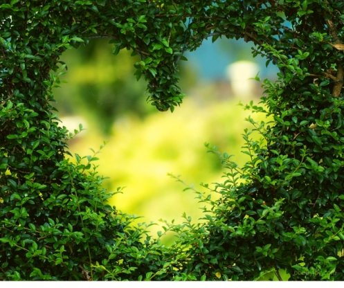 just - when the wound of inadequacy is no match for grace - heart - hedge @poetryjoy.com